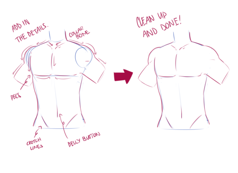 torso and waist 3.png