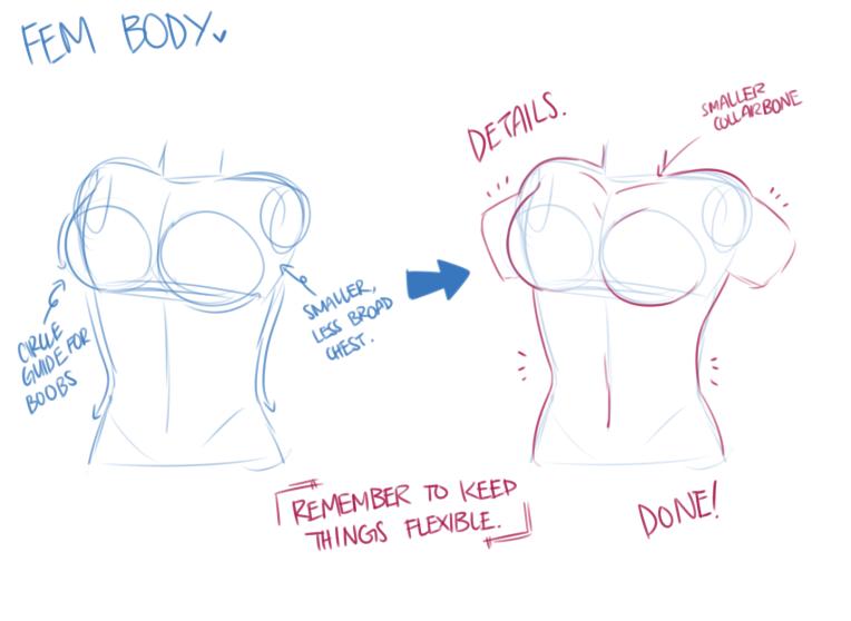 torso and waist 4.png