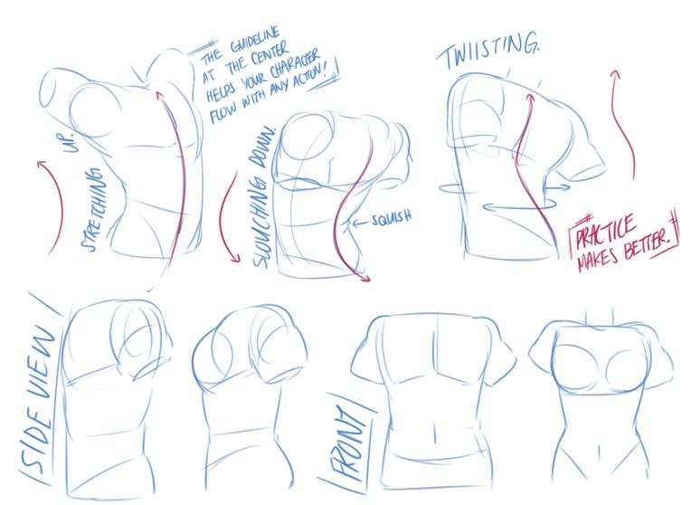 torso and waist 6.png